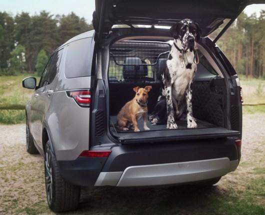 Løse hunde forbudt – så forstyrrende er Fido i bilen