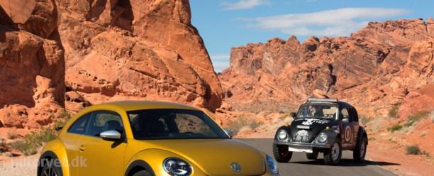 Ny Beetle Dune